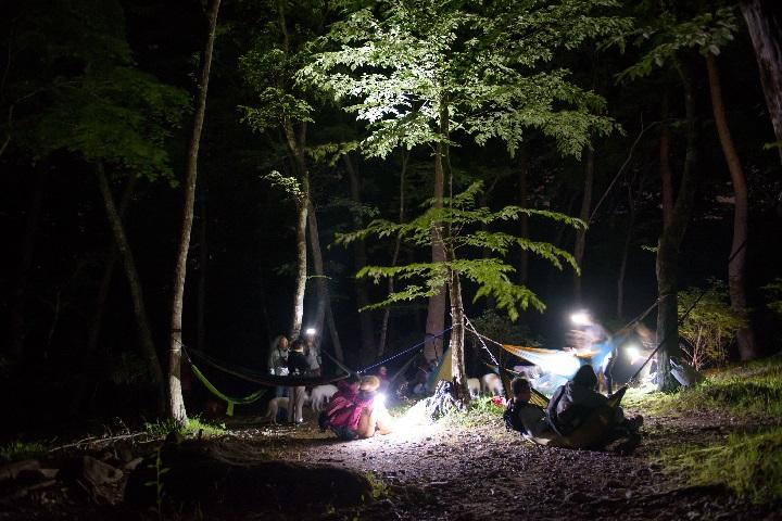 夜の森散歩&音瞑想